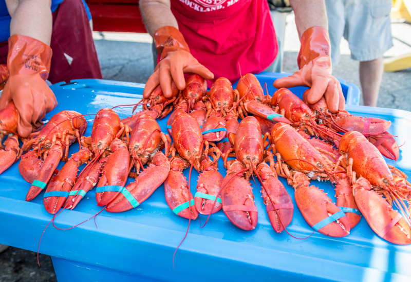 Maine Lobster Festival - one of the best events and festivals in Boothbay Harbor Maine and its surrounding area