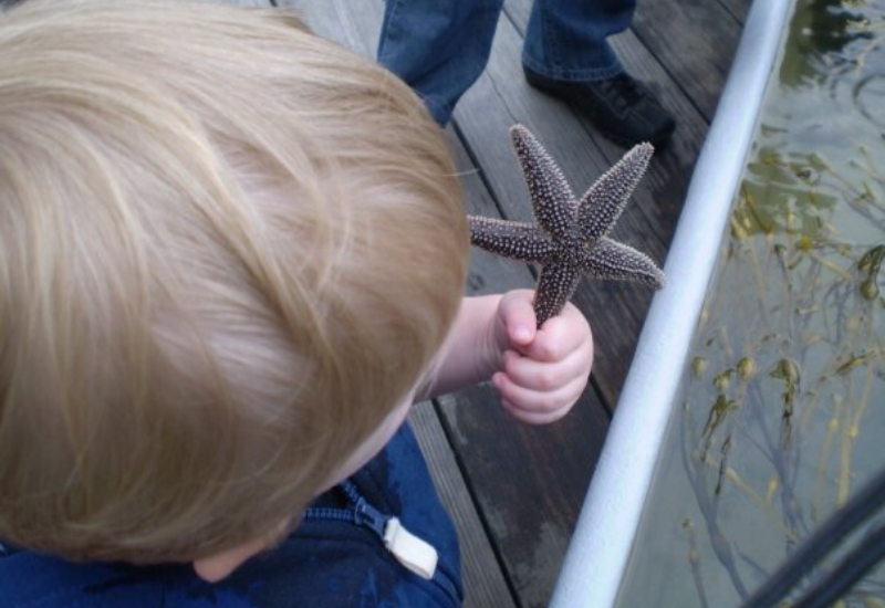 the Maine Aquarium is one of the best kid-friendly things to do in Boothbay Harbor Maine